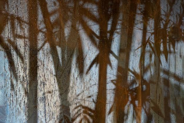 Абстрактная бамбуковая тень на матовом стекле в период дождя ночью с прожектором снаружи