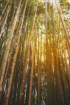 Bamboo stretching up