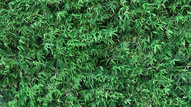 Бамбуковое дерево, зеленый цвет свежих листьев и светло-коричневый для тела и красивый узор для му