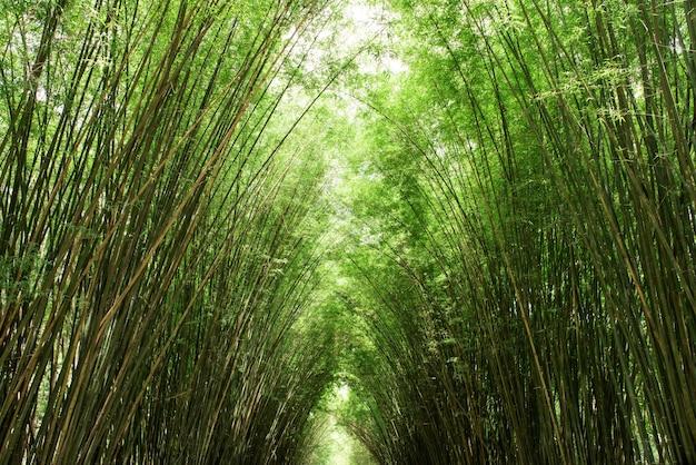 Бамбуковые деревья и зеленые листья.