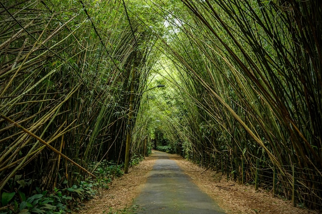 Bamboo trees overhang the road.
