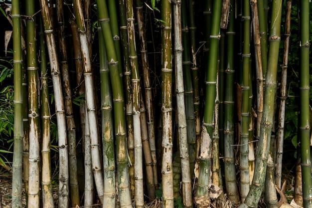 대나무 나무