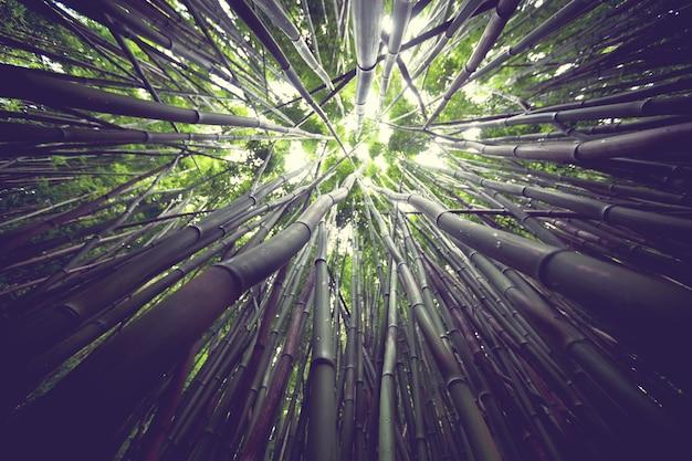 Bamboo in tropical grden, hawaii