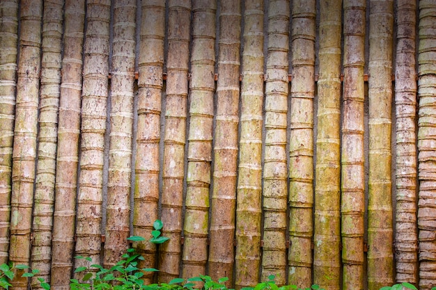 Bamboo wall decoration. background or texture.