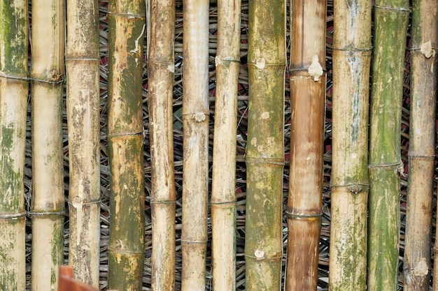 Bamboo wood bark aged oriental texture background. wooden branch backdrop