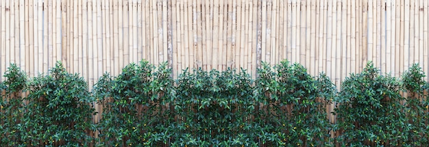 Bamboo wood fence texture pattern background with green leaves frame