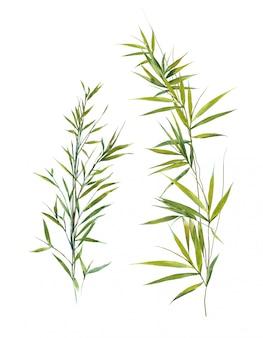 Bambooの葉の水彩イラスト
