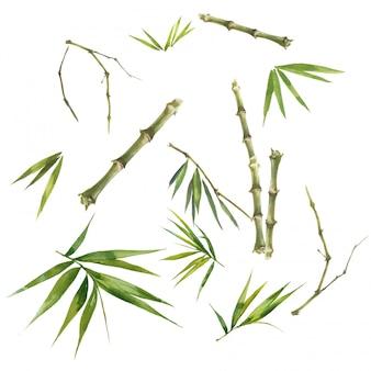 白い背景の上のbambooの葉の水彩イラスト絵画