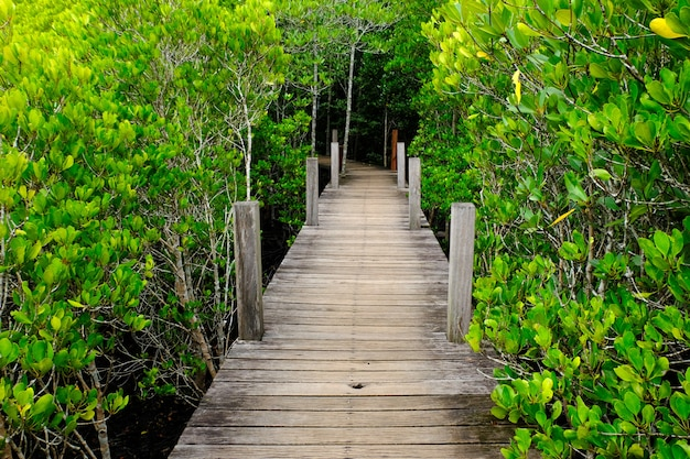 Ban hua khod mangrove forest