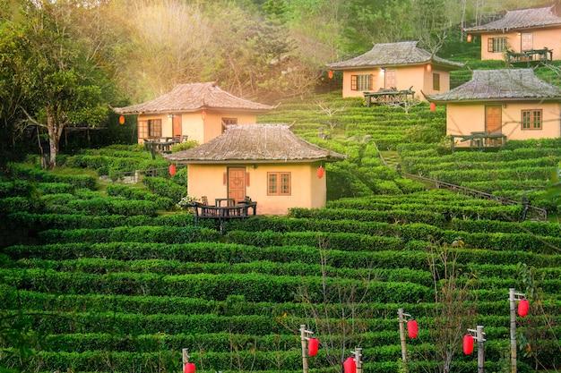 Бан рак тай - китайское поселение в провинции мэхонгсон на севере таиланда.
