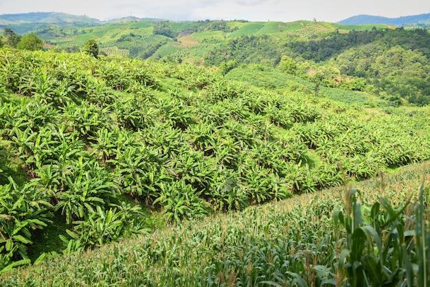 山の中のバナナガーデンプランテーション
