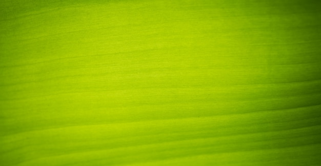 バナナの葉の詳細な背景を閉じる