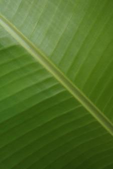 バナナの葉の緑のテクスチャパターン