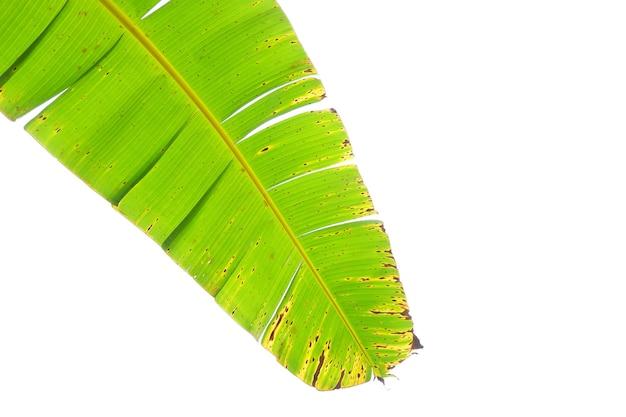 白い背景で隔離のバナナの葉