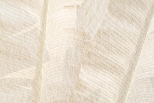 베이지 색 시멘트 배경 그림에 바나나 잎 패턴