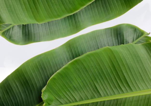 バナナの葉の表面とパターン。