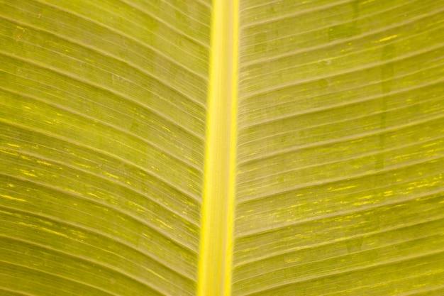 バナナの葉の質感
