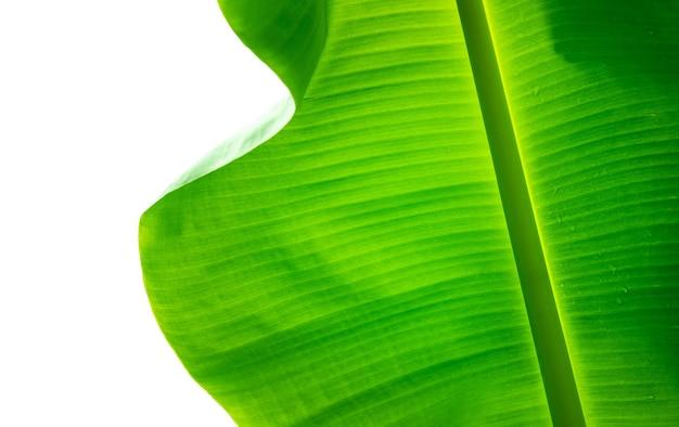 水滴とバナナの葉