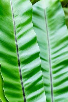 バナナの葉を閉じる-アップテクスチャーのある緑の垂直スペース
