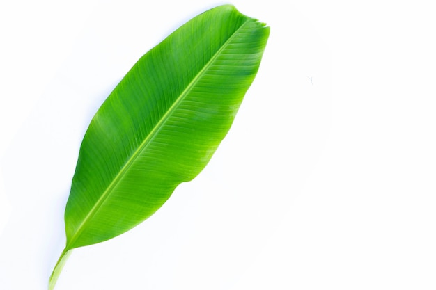 バナナの葉は白い背景に。