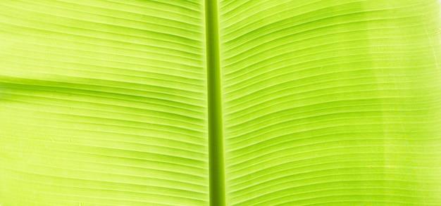 Банановые листья текстуры для фона.
