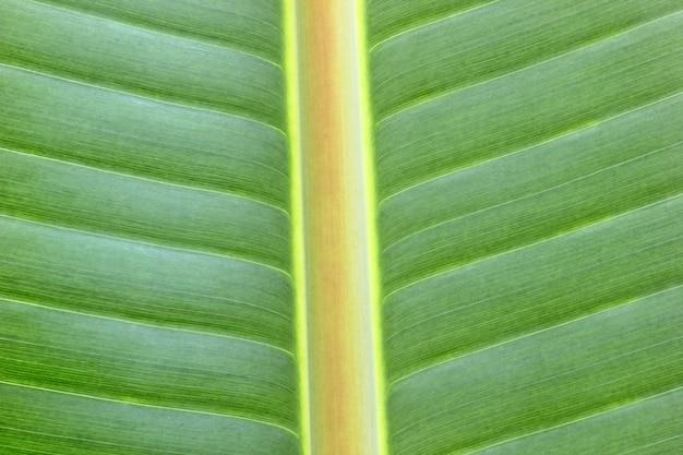 バナナの葉のテクスチャ