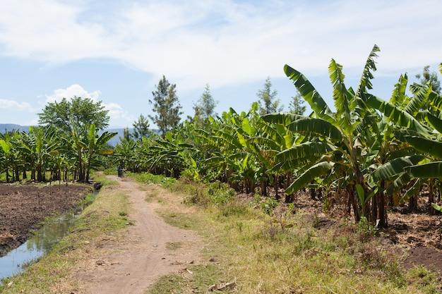 Банановая плантация возле озера маньяра, танзания, африка. сельский пейзаж