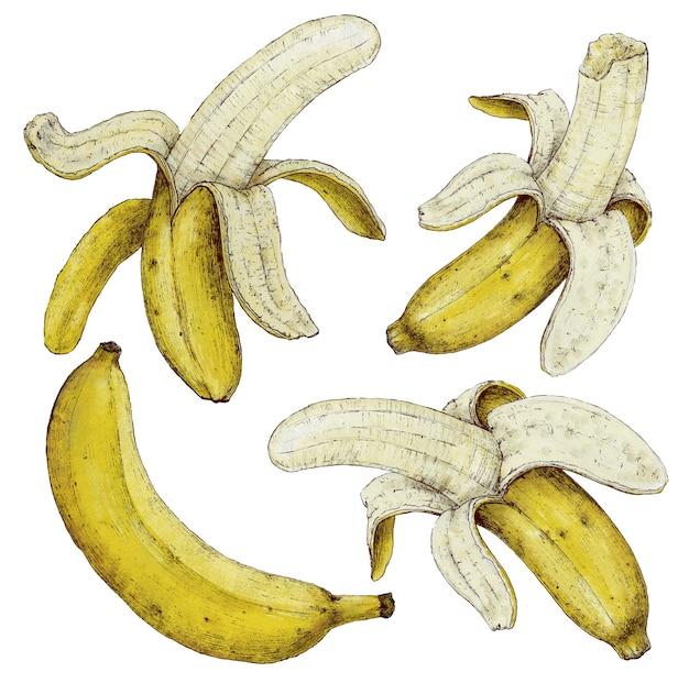Банан на белом фоне. рисование руки. подходит для дизайна из ткани, бумаги. и для дизайна кухни кафе, меню ресторана