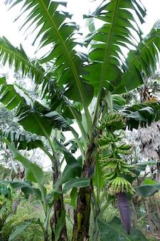 果物の束とバナナの木