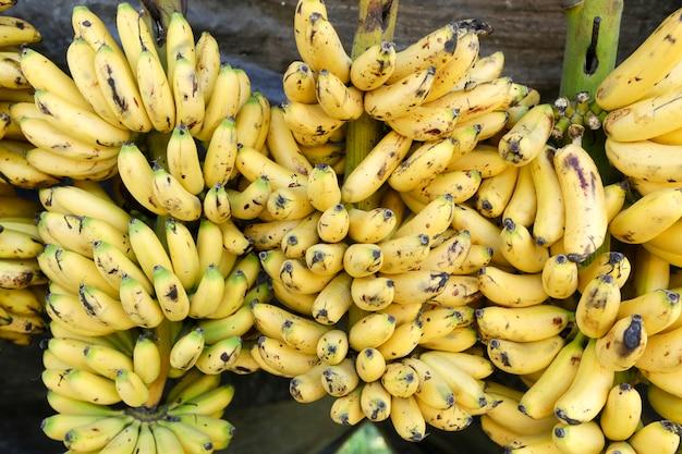 Banana variety