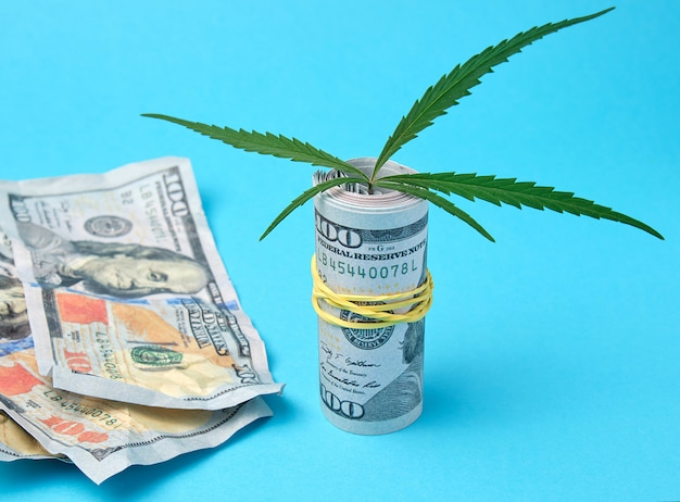 Banknotes of american dollars and green leaf of hemp