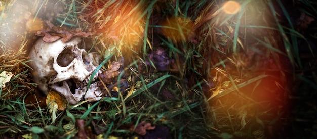 草の中の人間の頭蓋骨が紅葉の下に埋もれているバナー。偽の頭蓋骨のクローズアップ-自然な背景で。ハロウィーンのための人間の頭蓋骨のコピー、ホラー、死、病気、戦争の神秘的な概念。