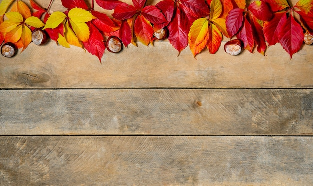 배너. 가 밝은 노란색-빨간색 나무 바탕에 나뭇잎. 복사 공간. 보드로 만든 자연 테이블에 밤과 처녀 포도 잎의 구성. 평면도. flatlay.