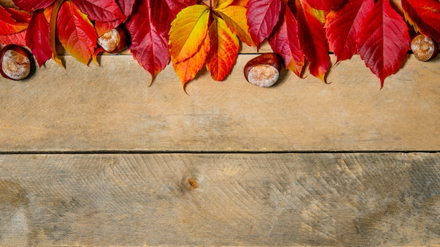 Banner. autumn bright yellow-red leaves on a wooden background. with copy space. composition of