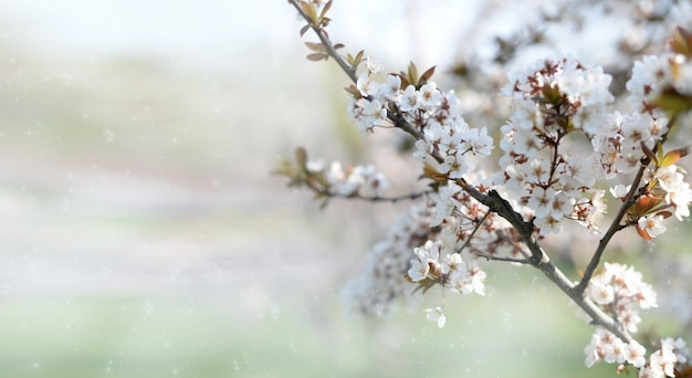 Banner background with blooming tree