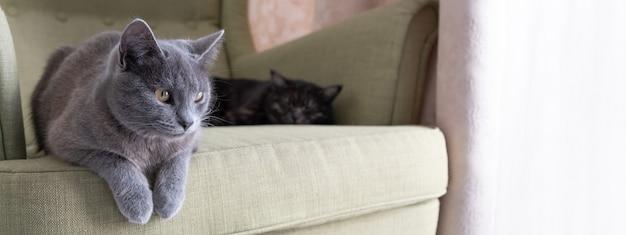 バナー。緑の肘掛け椅子に座っている国産の灰色のショートヘアの猫のクローズアップの肖像画。家に2匹の猫。動物病院、動物飼料、猫のブログの画像。
