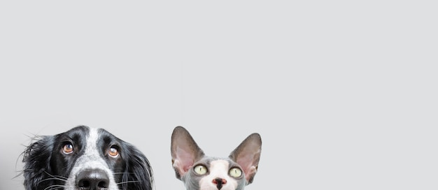 Баннер собака и кошка подряд прячутся. изолированные на сером фоне
