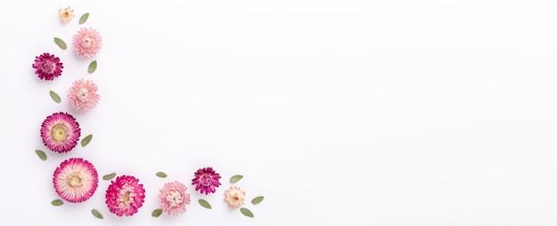 Баннер. цветочная композиция. ветви эвкалипта и сухие цветы на белом фоне. плоская планировка. вид сверху. копировать пространство - изображение