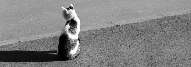 道路上のバナー孤独な野良猫、bw写真。野良家畜とホームレスの動物のコンセプト写真