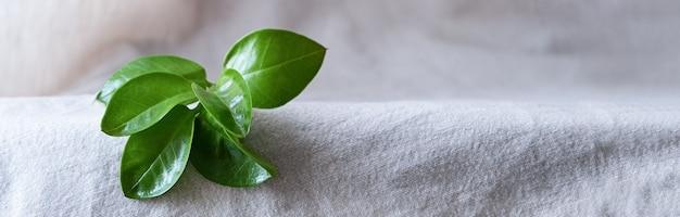 배너, 에코 제품에 대한 자연 배경. 린넨, 녹색 식물, 연단. 에코 컨셉