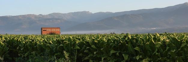 시에라 데 그레도스(sierra de gredos)의 담배 재배에 대한 탁 트인 전망의 배너