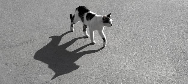 アスファルト道路に大きな影のバナー野良猫。黒と白のストックフォト