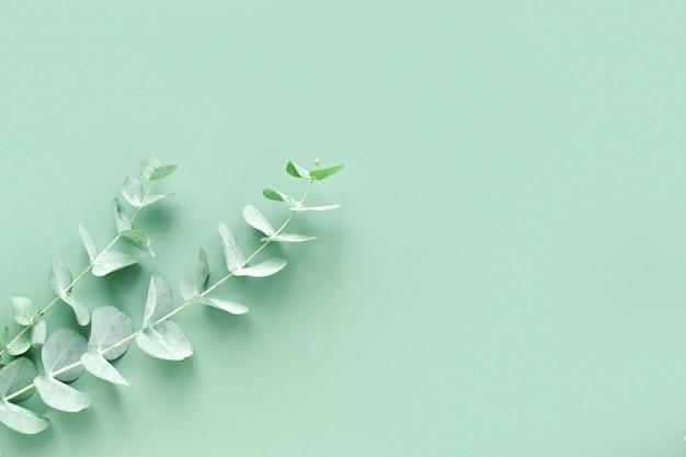 녹색 배경에 유칼립투스 가지가 있는 배너 생태화장품을 위한 미니멀리즘 배경
