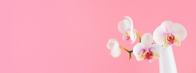 Banner with white phalaenopsis in the glass vase on pink