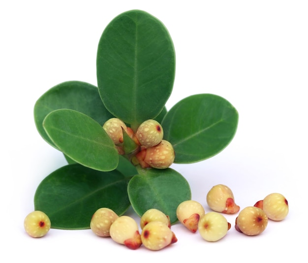 白い背景の上に葉を持つバンヤンフルーツ