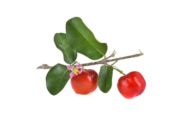 바베이도스 체리, 흰색 배경에 잘 익은 태국 체리