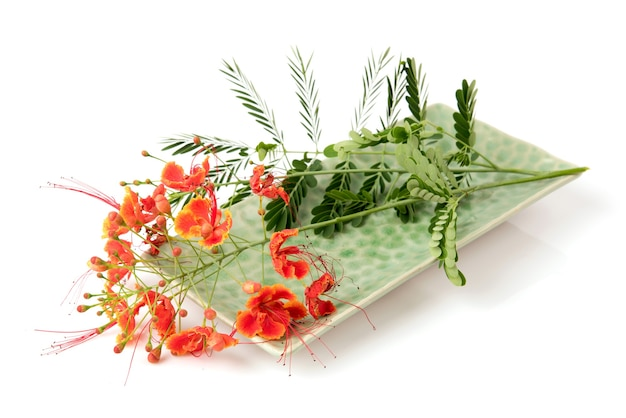 Barbados pride or caesalpinia pulcherrima flowers isolated on white background.