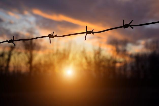 美しい夕日と夕方の森を背景に有刺鉄線。背景がぼやけている