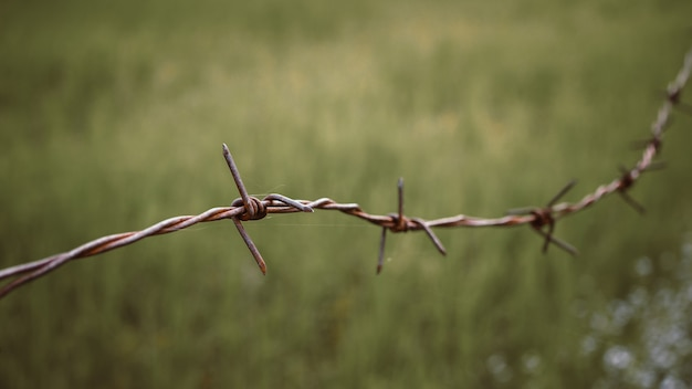 Barbed wire. barbed wire on fence to feel worrying