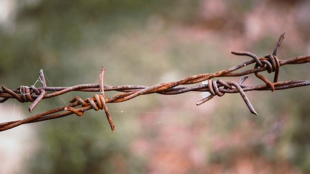 Barbed wire. barbed wire on fence to